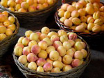 Armenian fruits - apricots
