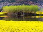 Nature of Shaanxi Province, China