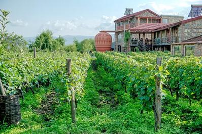 Vineyard, Kakheti