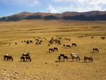 Kazakhstan Nature