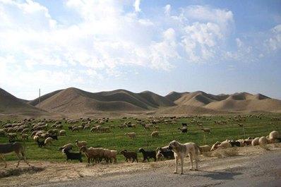 Ancient Dekhistan, Turkmenistan