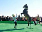 Akhaltek horse, Turkmenistan