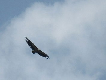 Eagle over the Tahta pass