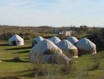 Safari Yurt Camp