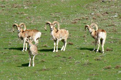 Nuratau Natural Reserve