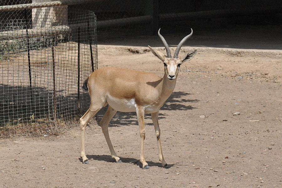 Le jardin zoologique tachkent for Le jardin zoologique