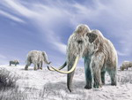akut mammoths used to live on this land